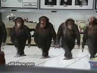 5 funny monkeys dancing