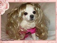 Pets In Wigs