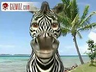 A hurt Zebra