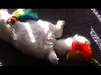 Pashmak sleeps with his toys