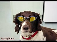 Dogs In Sunglasses!