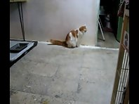 New videos in www.mycats.ir