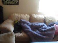 Couch potato dog