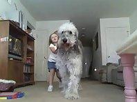 Funny dog playing tug of war