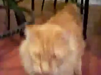 Very Funny Cat Talking
