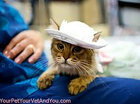 Cats With Hats!