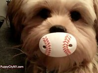 Pets Who Love Baseball!