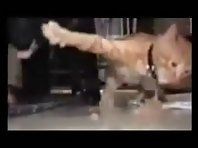 Funny Cats 3