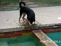 Lol dog funny