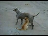 Cat feeds off from a Dog