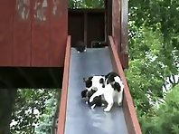 Cute kittens on a slide