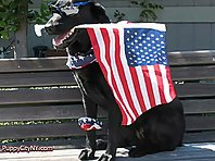 American Dogs Ready For The 4th of July!