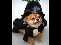 Cute Dogs in Halloween Costumes