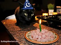 Pets Celebrating Their Birthday