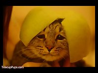 Cats Wearing Fruit Helmets