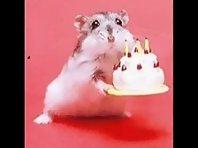 Cute hamster dance