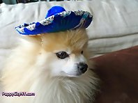 Cinco De Mayo Dogs!