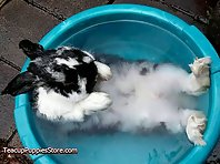 Bunnies Taking a Bath
