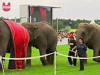 Elephant Race
