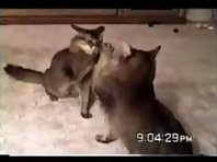 Funny Cats_2