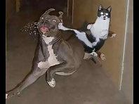 Funny cat show