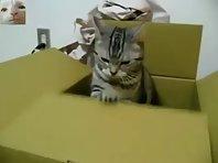 Serious Cat Sends An S.O.S.!