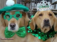 St. Patrick's Day - Irish Dogs!