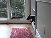 Doggie door faceplant