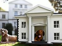 World's Most Expensive Dog Houses