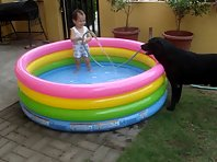 Back Yard Pools and Dogs are More Fun in The Philippines