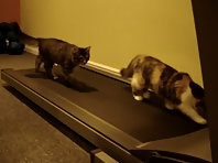 Treadmill Kittens