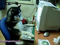 Pets Surfing the Web