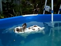 Chilled Rabbit