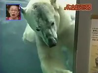 Live Action Polar Bear Attack