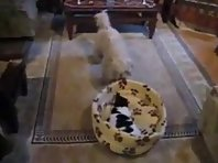 Funny Cat And Dog Fight For A Bed