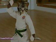 Karate Cats!