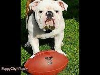 College Dog Mascots!