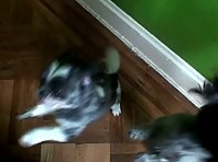 FUNNY ANIMALS VIDEO watch cute puppies do a CRAZY Dance Trick for Heal