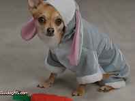 Pets Dressed For Easter!