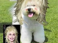Celebrity Makeovers on Pets
