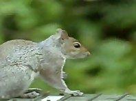 007 squirrel