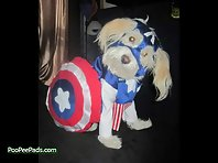 Dogs Who Think They Are Superheros