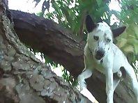 Dog climbing a tree