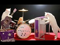Animals in a Band!