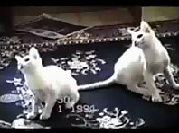 Probably the Funniest Cat Video You_ll Ever See