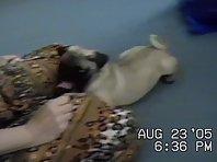 Boomer grabbing Bandit's tail