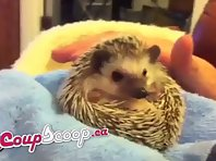 Cute CoupScoop Hedghog Sneezing Deals