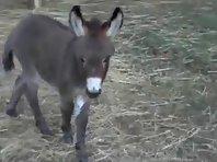 Cute donkey foal