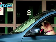 Subaru dog commercial