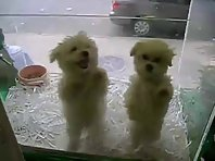2 Cute Dancing Puppies
